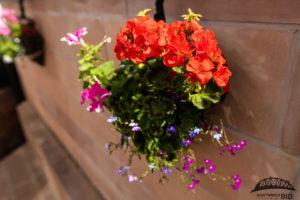 Northwich In Bloom flowers